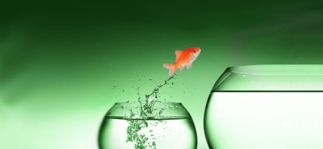 header-fish-green-1-1024x474